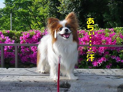 世田谷公園★�