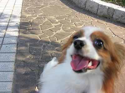 笑顔になれなーい!�