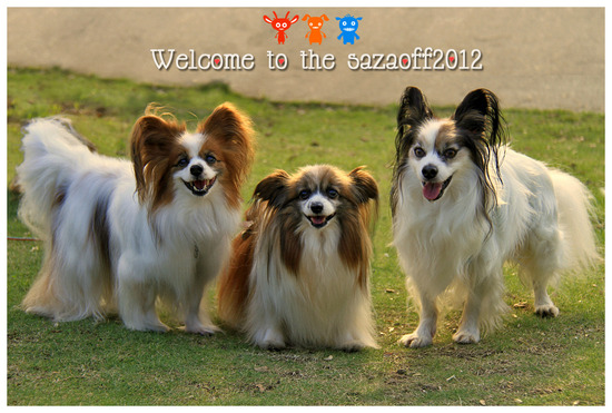 Welcome to the sazaoff2012♪