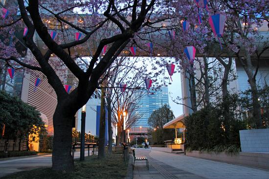 河津桜♪ 02