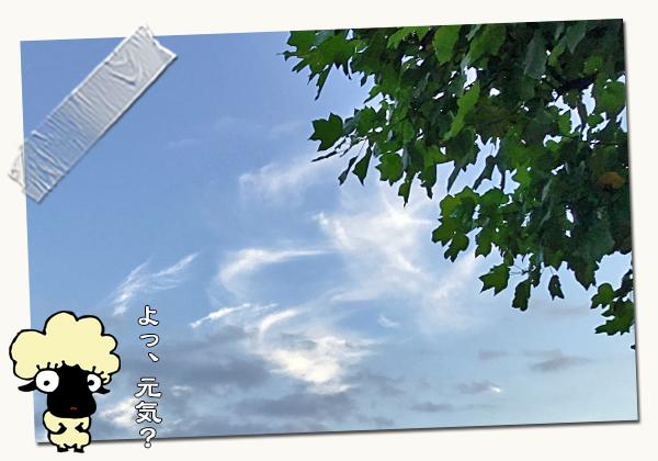 たぶん、細かいお知らせ☆ 01