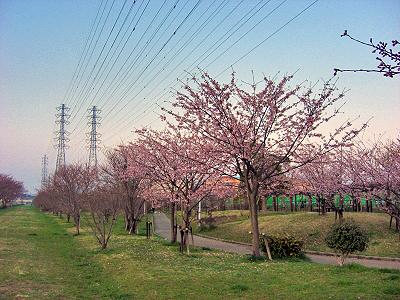 桜咲く・・・・�