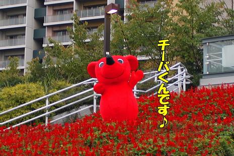 チーバくん★�
