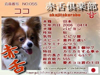 055-koko-2007