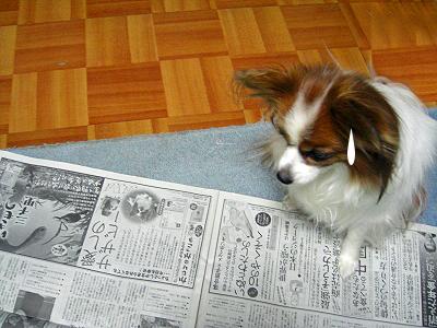 新聞広告★�