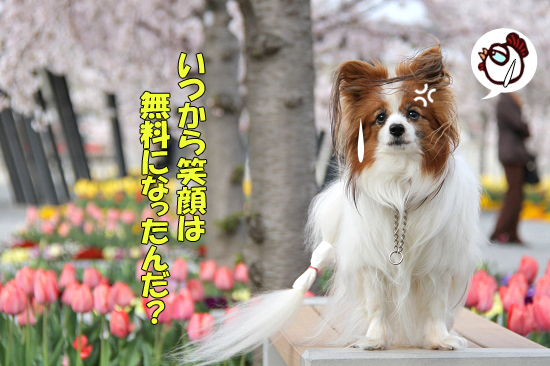今年の桜は綺麗です★☆★  04