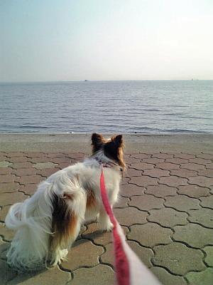 海に行きました。。