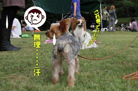 【サザオフ2011】 part5 16