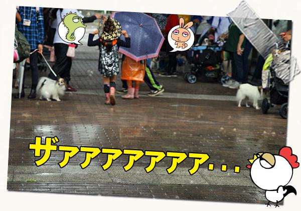 マジで雨じゃん・・・・・・(汗) 04