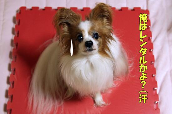 【マツワン★グランプリ】 08