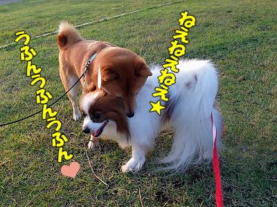 夏女VS夏男�