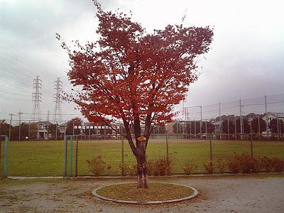 雨と紅葉�