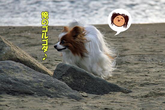 サザビー、砂浜に立つ!! 13