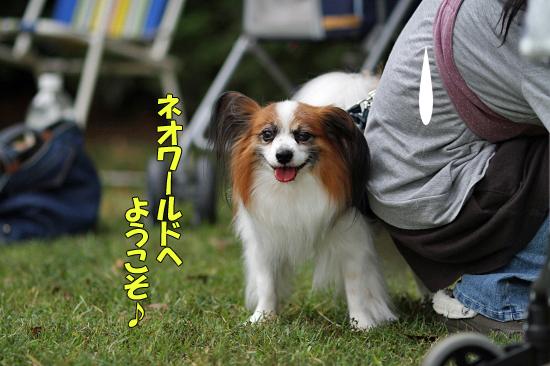【サザオフ2011】 part3 20