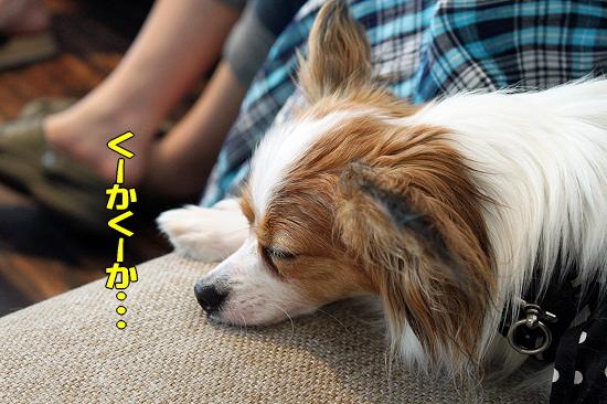 再びMerry Dog21