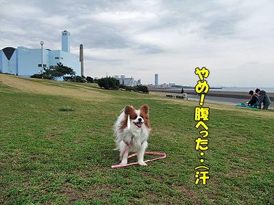 春一番(海浜霊園編)�