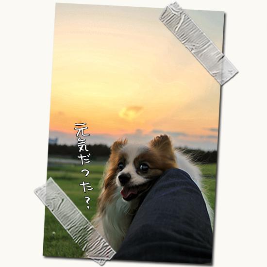 【サザオフ・2012】のお知らせ 01