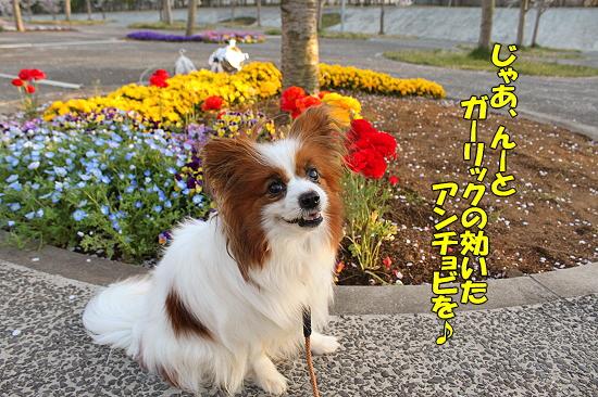 桜の下でじゃんがりあん★☆★21