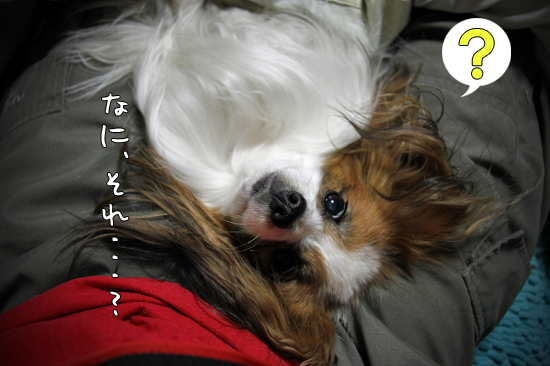 【ビルベリーカレンデュラ】 03
