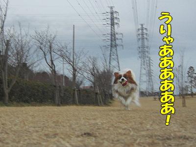 またたび強風・・・・(・∀・)ノ�