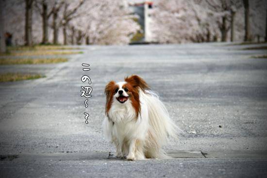 桜坂 17