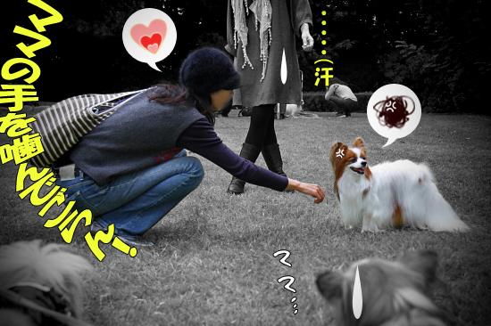【サザオフ2011】 part4 13