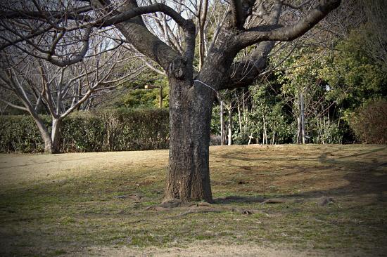 この木なんの木・・・ 01