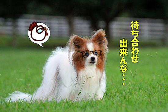 【サザオフ★2016】最終締め切り日です♪ 02