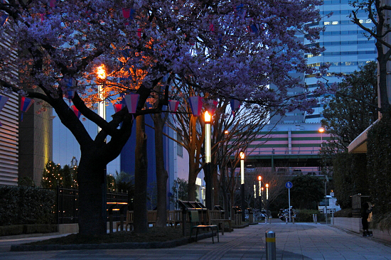 いつかの夜桜 01