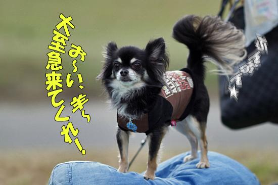 【サザオフ2011】 part5 18