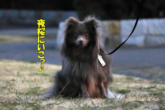 河津桜♪ 06