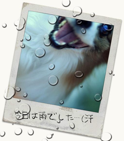 雨でした・・・(汗 01