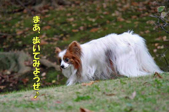 よせばイイのに香澄公園・・・ 10