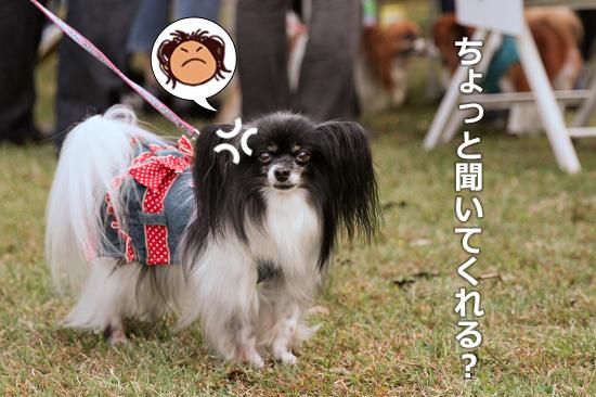 【サザオフ・2014】★その3 自己紹介タ〜イム♪ 01