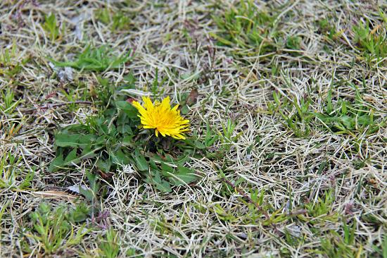 小さい春 09
