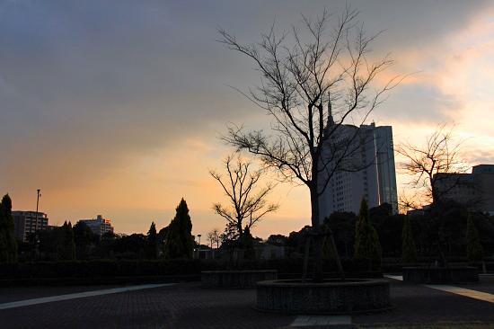 河津桜♪ 04