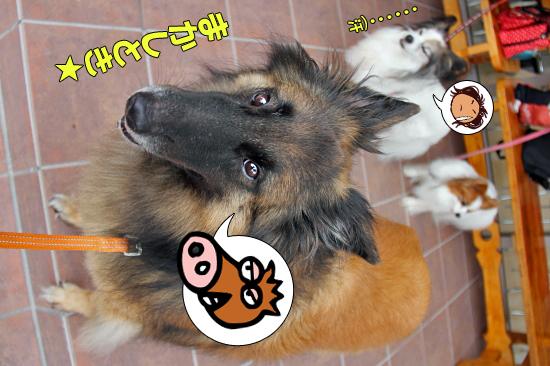 ラビたんの手術と凱旋門賞★☆★ 03