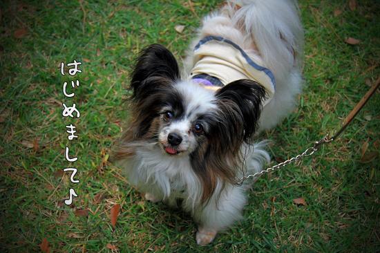 【サザオフ2011】 part5 22
