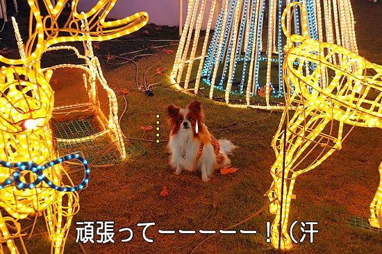 光の馬車★☆★ 15