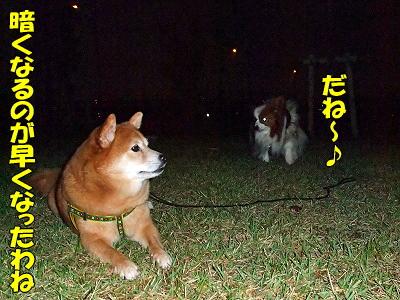 何犬??�