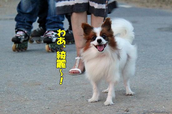 サマーソニック・2010♪(前編)�