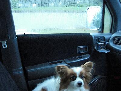 大雨・・�