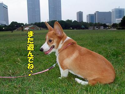 コギ夫★来襲!�