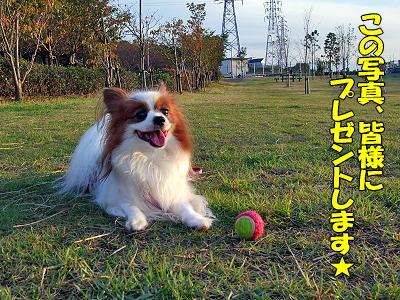 秋晴れ★�