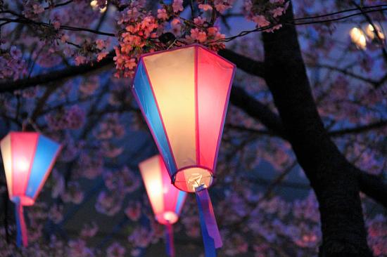 いつかの夜桜 10