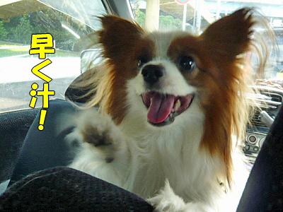 ちょびっとお出かけ(・∀・)ノ�