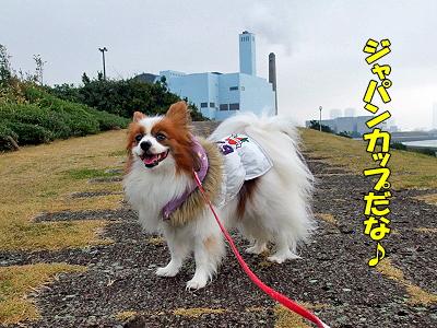 さあジャパンカップだ★�
