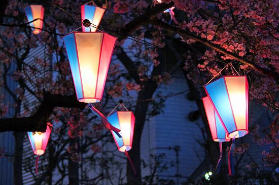 いつかの夜桜 02