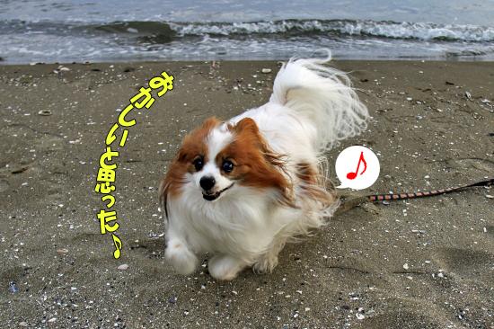 サザビー、砂浜に立つ!! 16