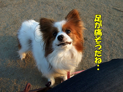 がんばれ、フーチ★�